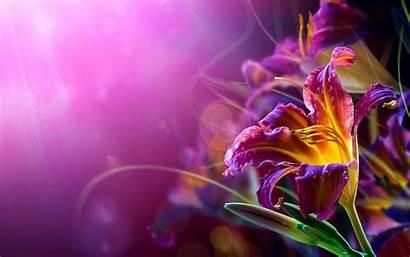Resolution Desktop Flower Background Wallpapers Widescreen Iphone