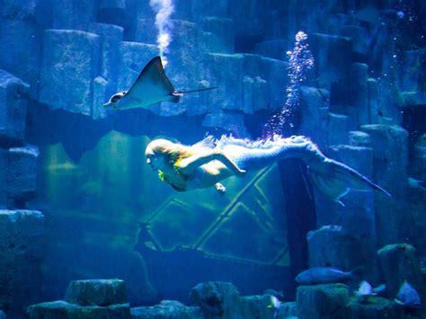 metro aquarium de 28 images aquarium cineaqua 29