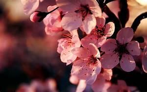 Pink Flowers Wallpaper Backgrounds #4728 Wallpaper ...