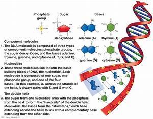 Mrs  Strong U0026 39 S Ap Biology  March 2014