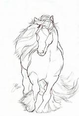 Horse Drawing Gypsy Vanner Drawings Easy Coloring Pages Rearing Contour Elipse Form Pferde Line Sketches Pencil Malen 3d Pferd Tinker sketch template