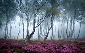 Wallpaper Stanton Moor, 5k, 4k wallpaper, 8k, Peak