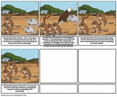 Selection Natural Project Step Storyboard Core
