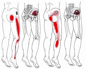 What is the Gluteus Minimus Muscle - Yoga Anatomy