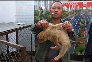 In Cina 18mln cani e 4mln gatti l'anno utilizzati come cibo Natura Ambiente&Energia ANSA it