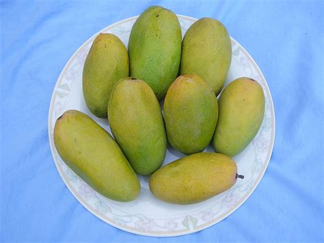 (mangifera Indica) (mampazham)-the King Of