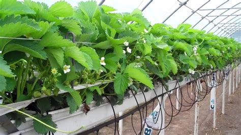 hydroponic gardening systems myths advanced nutrients