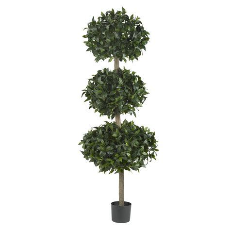 tree balls 69 inch sweet bay triple ball tree potted 5313