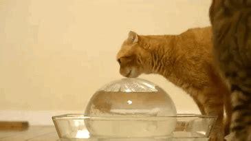 dramatic cats  deserve  oscar