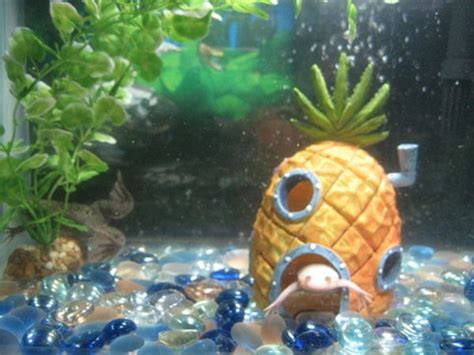 spongebob fish tank ornaments 1000 images about aquarium on finding