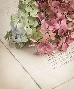 old love letters and garden flowers stock photo colourbox With love letters with flowers