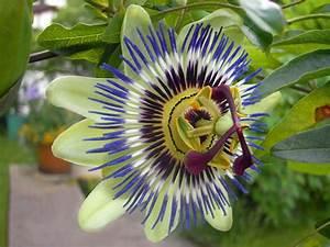 Kuebelpflanzen Winterhart Bluehend : topfpflanzen die topfpflanze ~ Whattoseeinmadrid.com Haus und Dekorationen