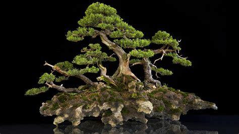 Worlds Most Amazing Bonsai Trees Youtube