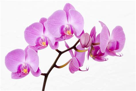 the orchid national orchid show pro landscaper the industry s number 1 news source