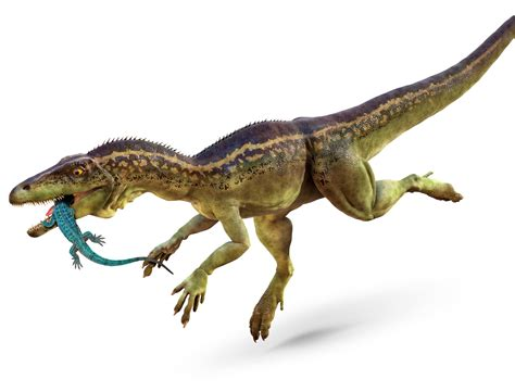 Eoraptor Dinosaur Eoraptor Facts Dk Find Out