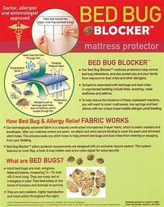 bed bug protectorwaterproof zippered mattress encasement With bed bug blocker mattress protector reviews