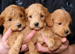 Wann Ist Ein Kürbis Reif : wann ist ein hund ausgewachsen gr e von hunderassen ~ Lizthompson.info Haus und Dekorationen