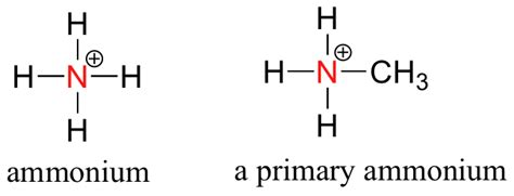 Protonated Amine by 3 1 Functional Groups Chemistry Libretexts