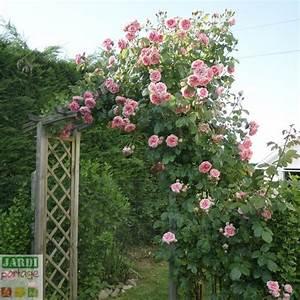 Comment Tailler Les Rosiers : les 5428 meilleures images du tableau le jardin se partage ~ Nature-et-papiers.com Idées de Décoration