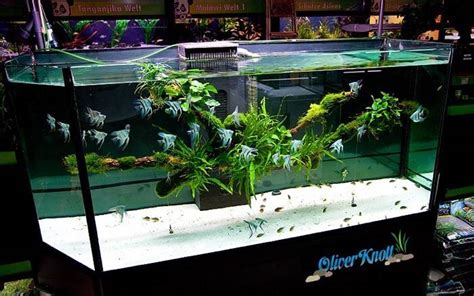 Oliver Knott Aquascaping by Aquascaping Styles We Scapefu053 Scapefu
