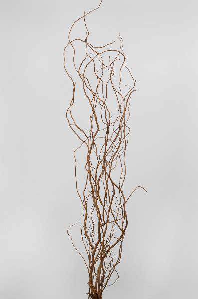 natural curly willow branches  branches   feet