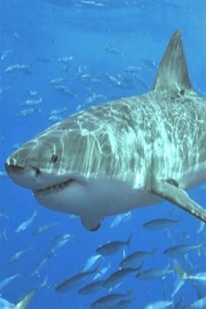 Sharks Water Shark Animals 4pint Pokemon Deep