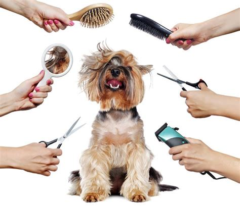 pet groomer  essential traits youll