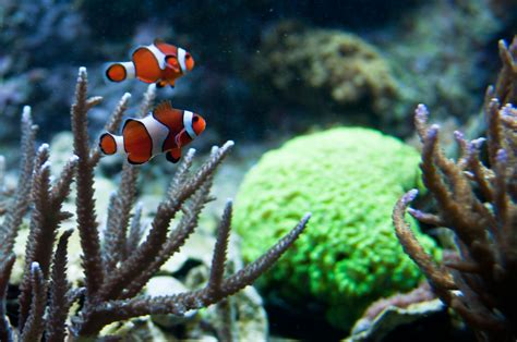 photo collections  england aquarium