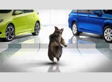 Possum Dance YouTube