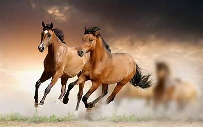 Horse Scenes Res Iphone