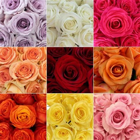 colors of roses wedding flowers 101 everything you need to apw