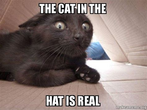 Your daily dose of fun! the cat in the hat is real - | Make a Meme