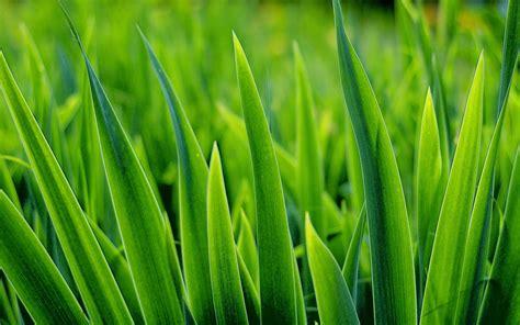 Die Farbe Grün by Das Leben Ist Bunt Aber Gr 252 N