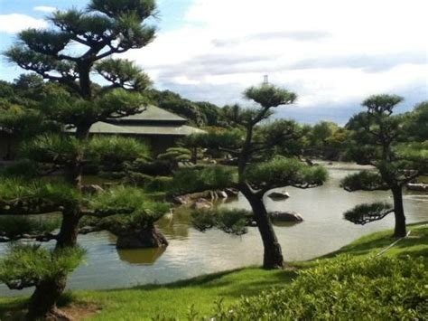 japanese tree bonsai maybe picture of daisen park