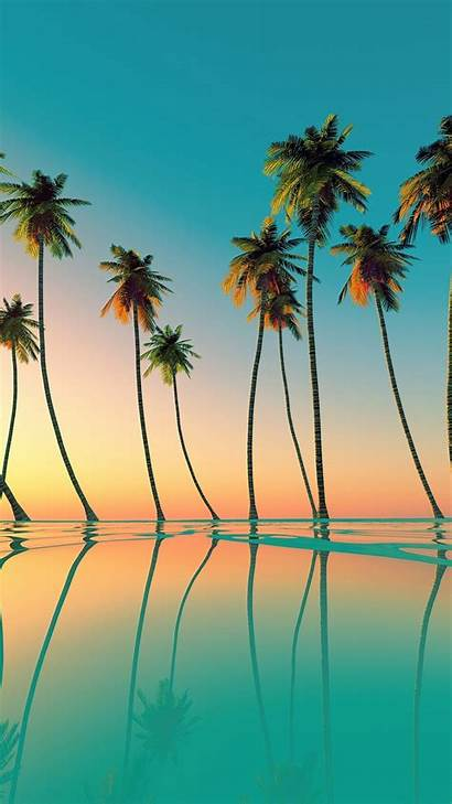 Palm Beaches Wallpapers Tree Trees