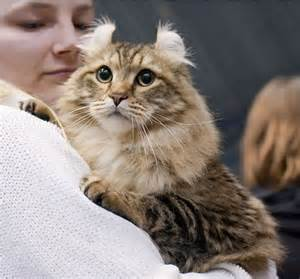 all cat breeds all the beautiful cat breeds in the world all2need