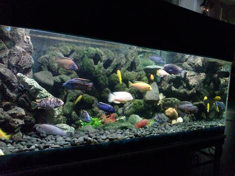 Diy Aquarium Background Turn Tiles Into A 3d Fish Tank Background Diy Techblogger