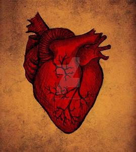 The human heart by SkarlettFury on DeviantArt