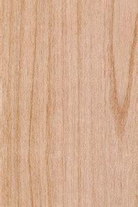 alder alnus rubra   youve overlooked