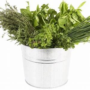 Herbes Aromatiques En Pot : comment cuisiner les herbes aromatiques cuisine ~ Premium-room.com Idées de Décoration