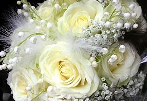 White Roses Images - Beautiful HD Wallpapers ...