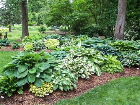 outdoor garden plants garden with green lawn and hostas fertilize your outdoor lawn chsbahrain com