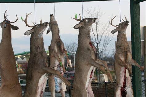 shooting  deer step  step