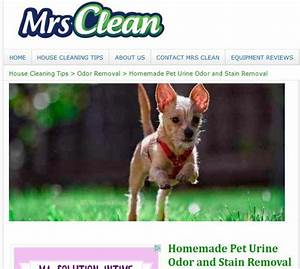 Homemade Pet Urine Odor And Stain Removal