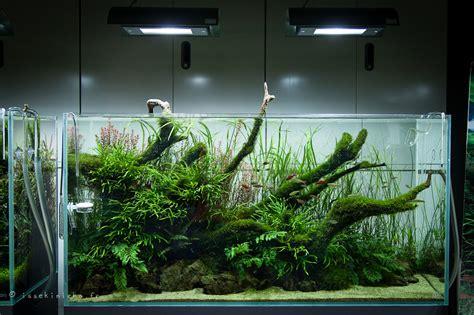 ada aquascape billedresultat for ada cube garden jungle aquascape