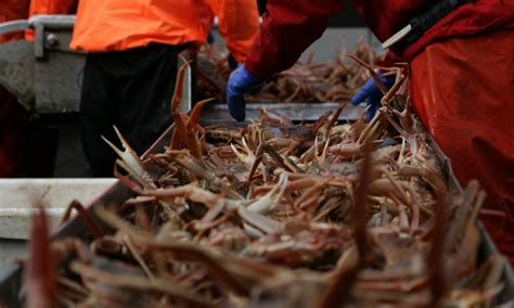 illegal fishing puts crab populations at risk stories wwf