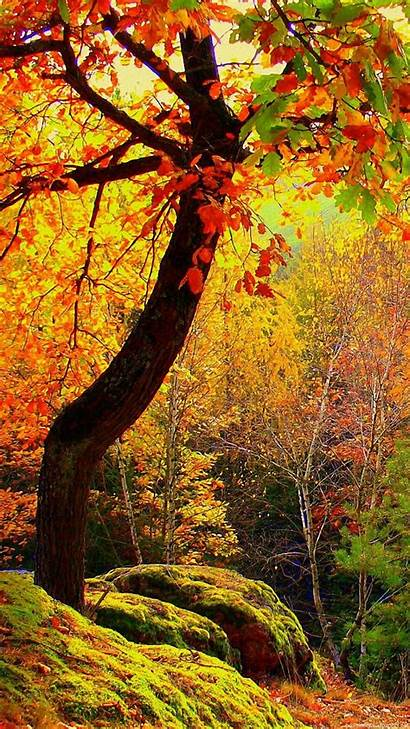 Autumn Landscape Trees Forest Wallpapers Background Fall