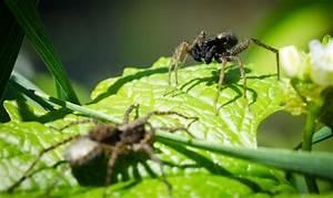 Pflanzen Gegen Spinnen : spinnen bek mpfen spinnen bek mpfen liebe deinen garten ~ Lizthompson.info Haus und Dekorationen