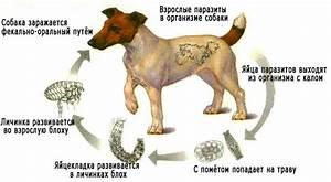 Лекарства для простатита у собак