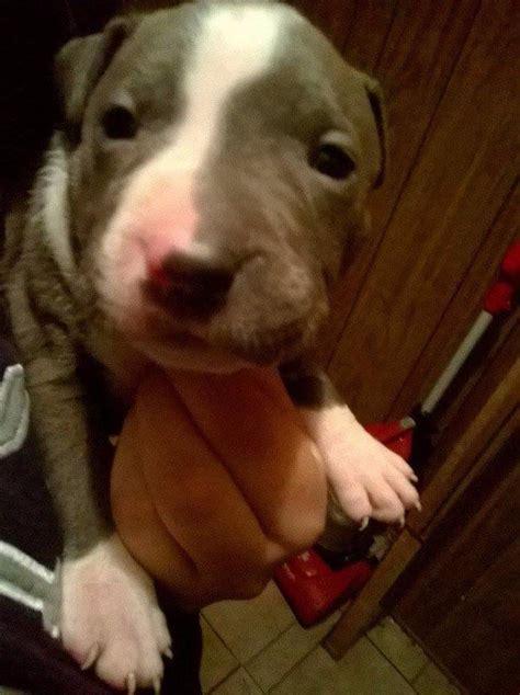 feeding   week  puppy thriftyfun